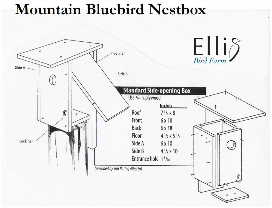 Mountain Bluebird House Plans Nestboxes Woodwork Blue